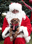 Paws with Claus @ City Bark